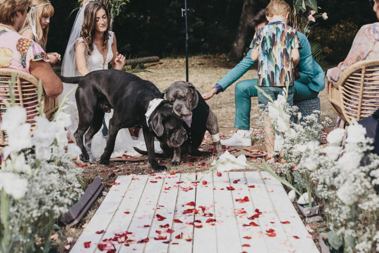 Bride, groom and dogs
